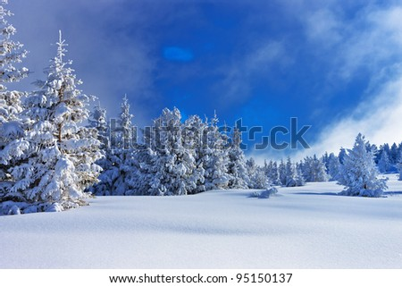 blue and white winter composition - stock photo