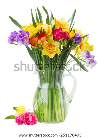 blue and yellow freesia and daffodil  flowers  in glass vase  isolated on white background - stock photo
