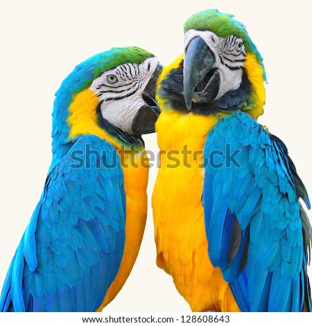 Birds Online  General facts about budgies  Keeping