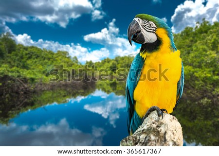 Blue and Yellow Macaw on the nature - stock photo