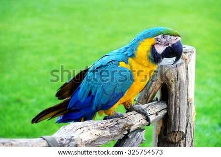 Blue And Yellow Macaw Or  Ara Ararauna  Parrot On The Wood Fence - stock photo