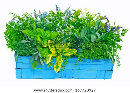 blue basket with various fresh herbs  - stock photo