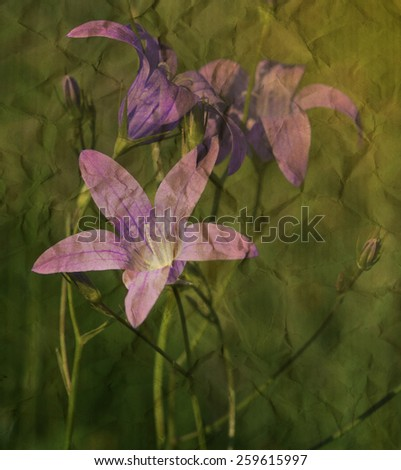 Blue bell wild flowers on textured paper background, spring scene - stock photo