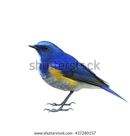 Blue and orange bird logo - photo#22