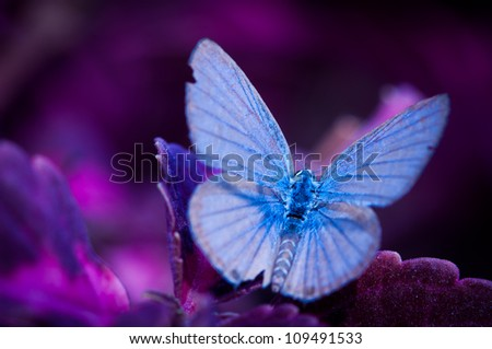 Blue butterfly in my dreamland - stock photo