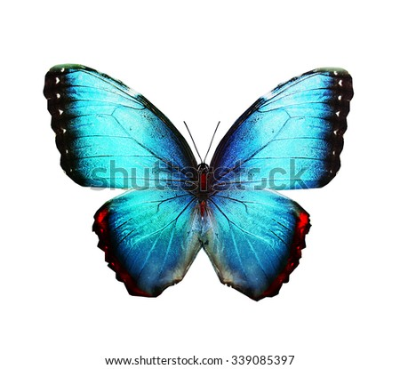 Blue butterfly , isolated on white - stock photo