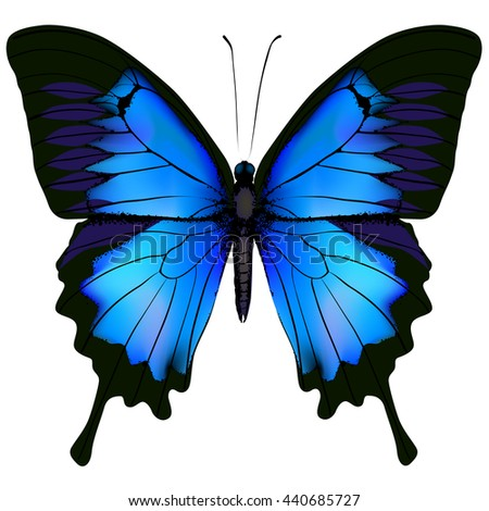 Blue butterfly papilio ulysses. Mountain Swallowtail isolated on white background  - stock photo