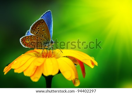 Blue butterfly sunlit - stock photo