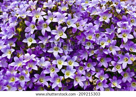 Blue campanula flowers as a background. - stock photo
