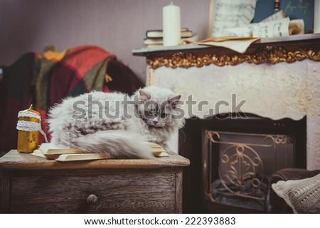 blue cat in the interior, beautifully retro - stock photo