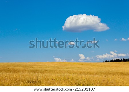 Blue cloudy sky over a yellow summer field - stock photo