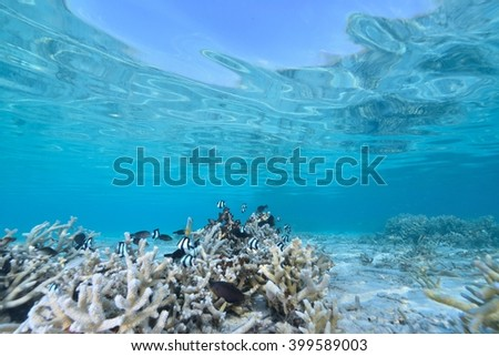blue coral - stock photo