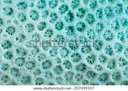 Blue Coral structure background, close up - stock photo