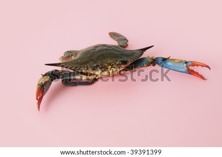 blue crab claws - stock photo
