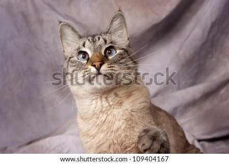 Blue Eyes 3 - stock photo