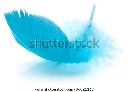 Blue Feather in soft-focus view. Close-Up. With white background - Isolated. - stock photo
