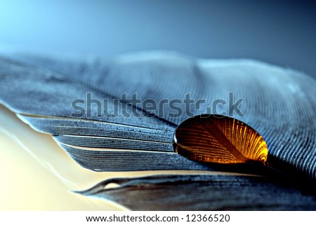 Blue feather with golden droplet - stock photo