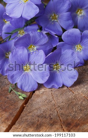 Blue flax flowers close up on an old wooden board. vertical  - stock photo