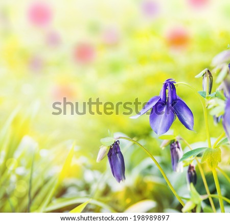Blue flowers in garden, floral background - stock photo