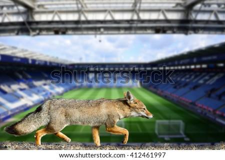 Blue fox leicester city football club premier league champions 2016 - stock photo