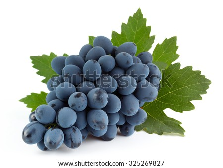 Blue grape fruit with leaf isolated on white - stock photo