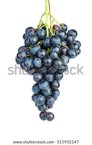 Blue grapes (Isabella bread) isolated on white background - stock photo