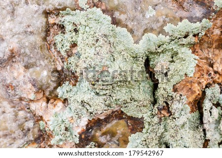 blue green lichen on tree trunk with red background - stock photo