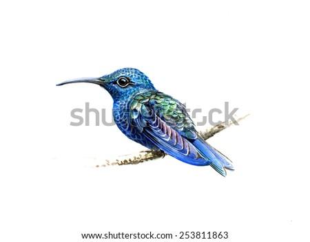blue hummingbird - stock photo