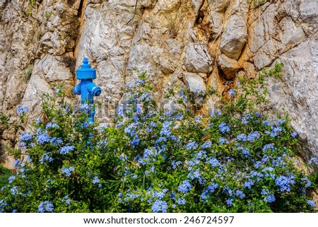 Blue hydrant and flowers - stock photo