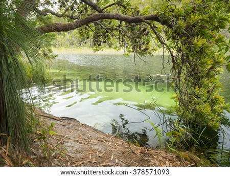 Blue Lake on North Stradbroke Island, Queensland, Australia is the perfect fresh water swimming hole - stock photo