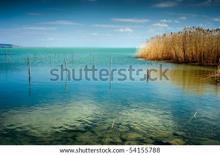 Blue lake with reed at summer - stock photo
