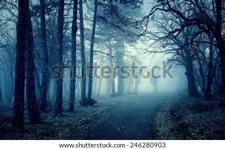 Blue light in a mysterious forest with fog - stock photo