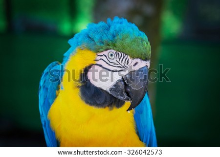 blue macaw ara parrot - stock photo