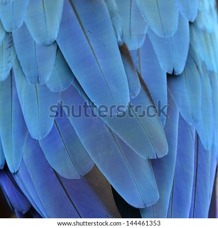 Blue macaw feather or plumage with very details - stock photo