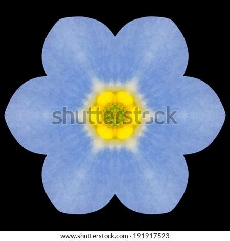 Blue Mandala Forget-me-not Flower. Kaleidoscope of Isolated on Black Background - stock photo