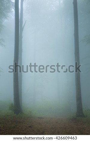 Blue morning fog into the forest - stock photo