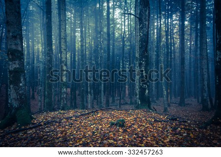 Blue night in the ghost forest of Transylvania. - stock photo