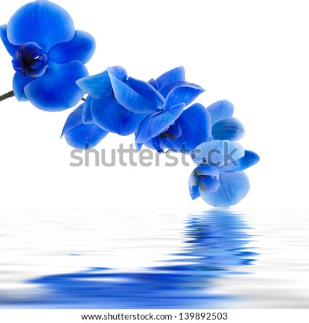 blue orchid background with reflection in water - stock photo