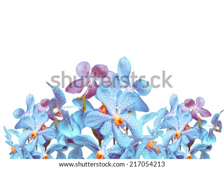 Blue orchid on white background - stock photo