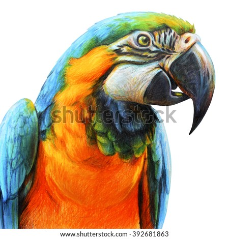 Blue parrot drawings. Blue and yellow Macaw. Ara ararauna. Colored pencil drawing Macaw. Classic drawing Macaw. Detailed drawing Macaw. - stock photo