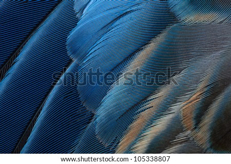 Blue parrot feathers - stock photo