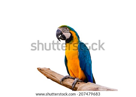 Blue parrot macaw isolated on white background - stock photo