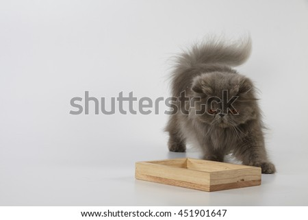 Blue persian cat looking down to the wooden tray on white background  - stock photo