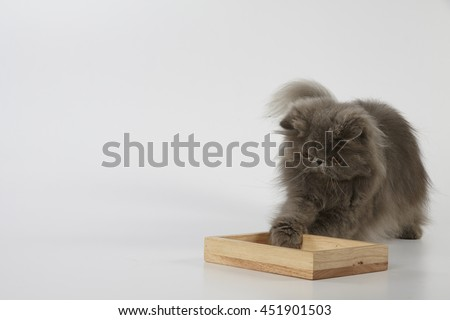 Blue persian cat touching the wooden tray on white background  - stock photo