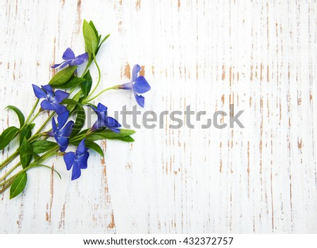 Blue Perwinkle flowers on a wooden background - stock photo