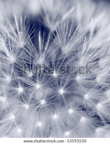 Blue seeds - stock photo