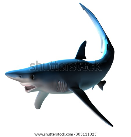 Blue Shark - The Blue shark can be found around the world in deep temperate and tropical ocean waters and is a predatory fish. - stock photo