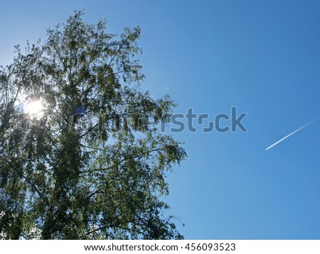 Blue sky against sun through birch tree branches with jet aircraft inversion traces.         - stock photo