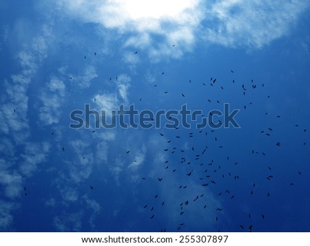 Blue Sky And Flock Of Flying Birds - stock photo