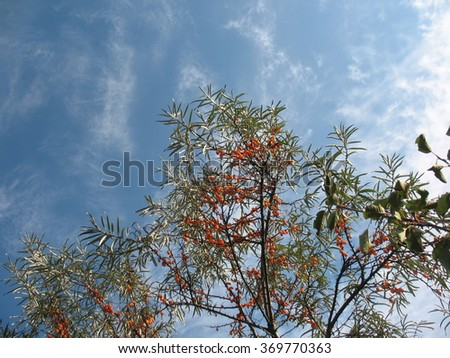 Blue sky and trees - stock photo